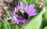 Local Authorities get buzzing for pollinators