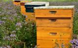 South Kilkenny Beekeepers Association