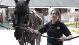 WATCH: Introducing Batman and Nives (Robin) from the Garda Mounted Unit