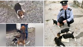 WATCH: Gardaí find stolen puppies and we're in love