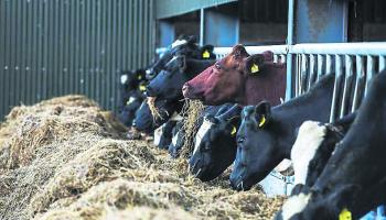 'Young farmers key to agricultural emissions reductions' - Macra na Feirme