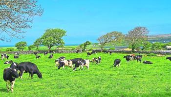 Extending the Grazing Season - Teagasc advice for Kilkenny farmers