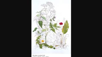 Be Inspired by the 'Wonderful Weeds of Spring'with Botanical Artist Yanny Petters in Kilkenny