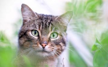 A gardening cat-astrophe!