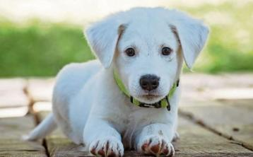 Offaly Gardai issue appeal to dog owners after recent thefts