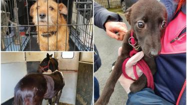 PHOTOS: 17 animals seized in Kilkenny due to welfare concerns in garda led investigation