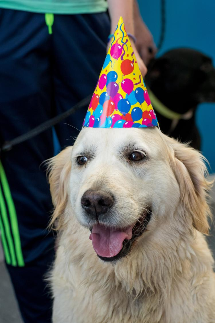 Photo Gallery Petmania Kilkenny Secures Guinness World