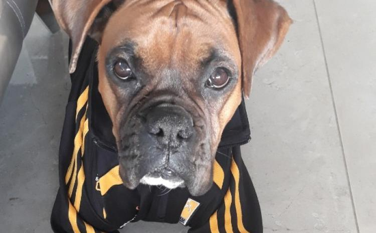 Up the Cats (and dogs!) Kilkenny pets gallery from readers