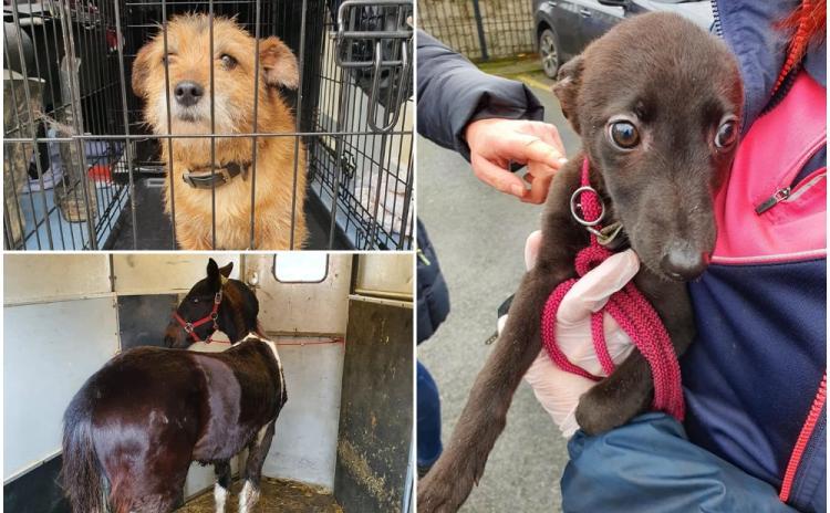 PHOTOS: 17 animals seized in Kilkenny due to welfare concerns in garda led investigation