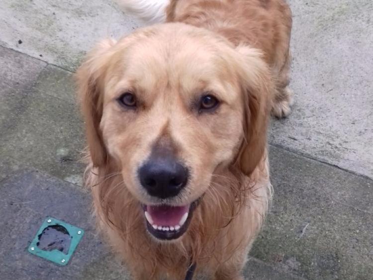 Dog Rescue Kilkenny